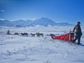 a man with a sled pulled by dogs stood in the snow with mountains in the background