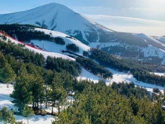Trees & snowy mountain