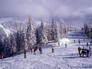 Group of skiers in the snow